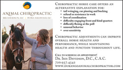 Chiropractic large