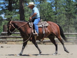 4. Ranch Riding and Reining Clinic