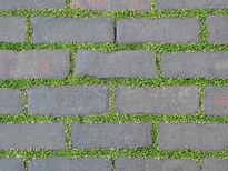 weeds on path ways