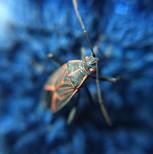 beetle-5478964_1920.jpg