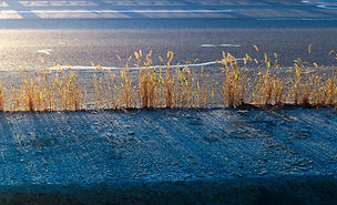 weeds in cracks