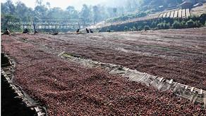 衣索比亞產區,從合作社邁向單一小農的精品發展新趨勢
