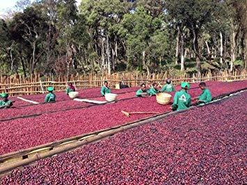 非洲冠軍來囉!衣索比亞古吉布榖阿貝兒村-牡丹BUKU日曬處理咖啡豆(得獎批次)