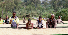 衣索比亞孔家咖啡豆…是誰家?