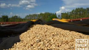 你一定得認識的產區:衣索比亞咖啡產區的大明星 - 耶加雪菲