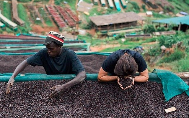 探索蒲隆地-非洲之心,不可小覷的新興精品產區
