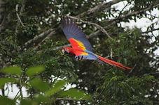 Chiapas Selva lacandona