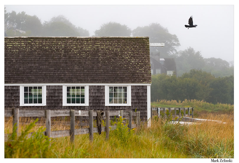 """Boathouse and a Crow"""
