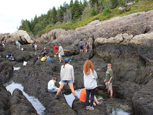 Lessons From the Tidal Pool