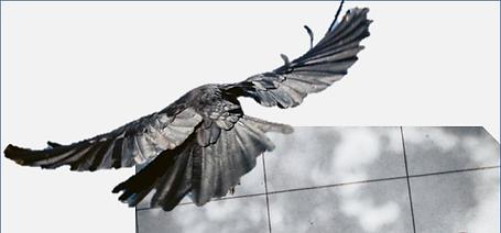 Aigle en vol-gris-carreaux.png