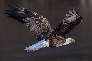 Eagle 09.jpg