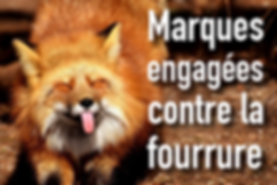 marques_furfree.png
