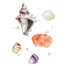 camillebelletillustrationcoquillage.jpg