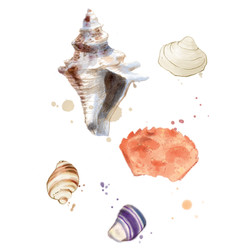 illustration de coquillages