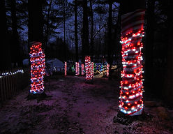 Tree trunks decorated with red and while Christmas lights.