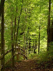 Walking trail with lush green ferns