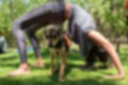 Dog Yoga 2.jpg