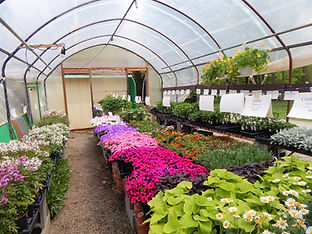 The greenhouses at Beech Creek Gardens in Alliance, Ohio are teeming with beautiful flowers and plants for all your gardening needs