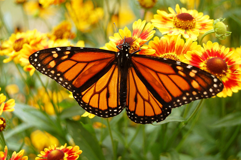 Education_ButterflyHouse_General_3_Compr