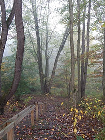 Foggy wooded trail with autumn trees