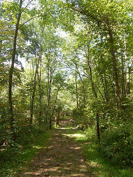 Lush green woods and dirt hiking trail