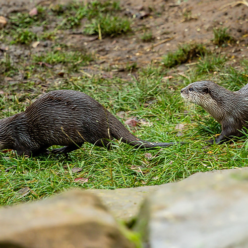 Woburn wildlife photography experience