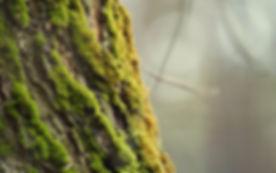 Tree-bark-moss_2560x1600.jpg