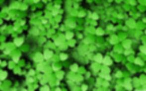 127-1277523_4-leaf-clover-4k.jpg
