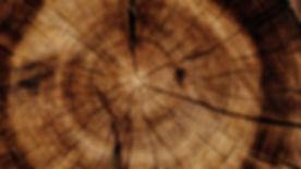 Tree-trunk-stump-texture_3840x2160.jpg