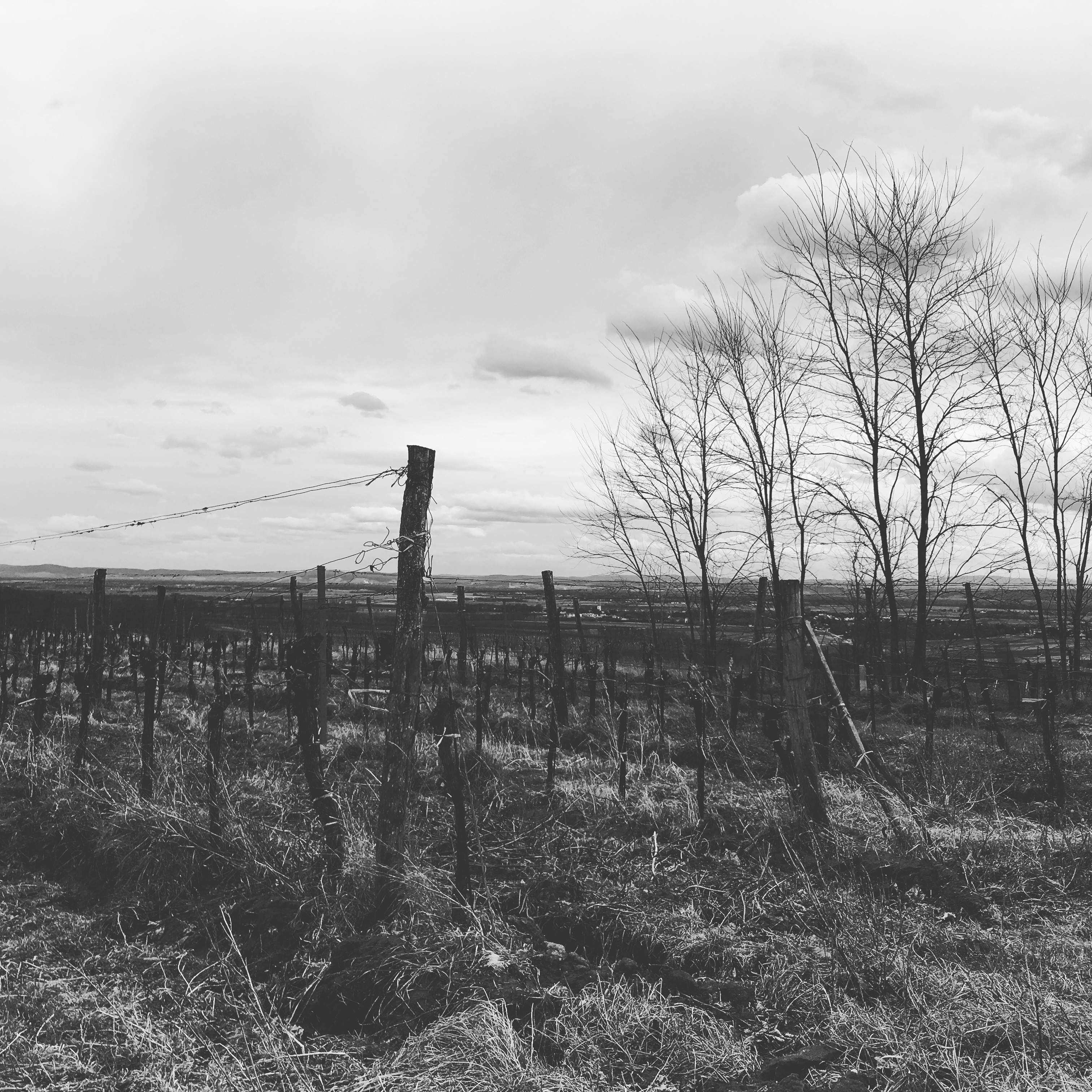 Wimmer Vineyard