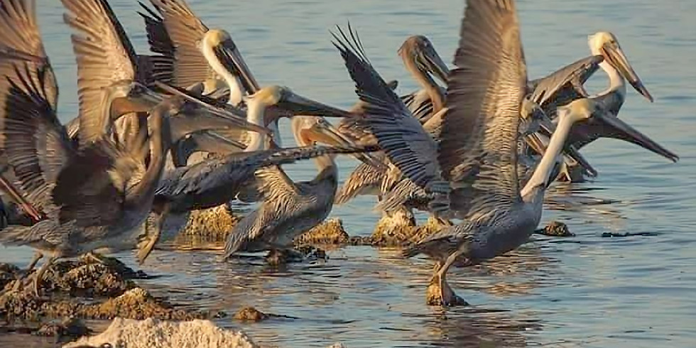 Salton Sea Wildlife & Photo Tour