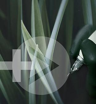 herbe-fond-a.jpg