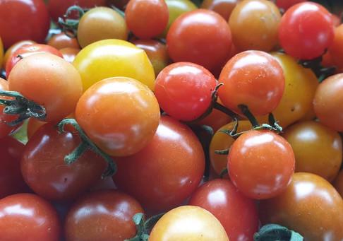 T & T Peihana Farm red toms.jpg