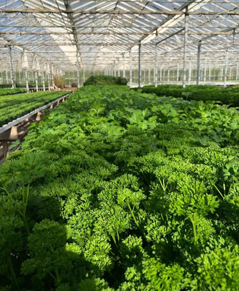 Natural Fare Herbs