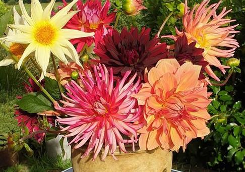 T & T Peihana Farm flowers.jpg
