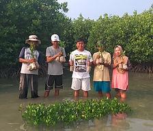 mangrove tree farmers is holding mangrove