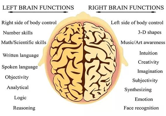 Brain-Lateralization.png