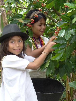 arhuaco kids coffe