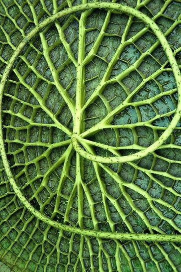 Nature spiral creation magic leave