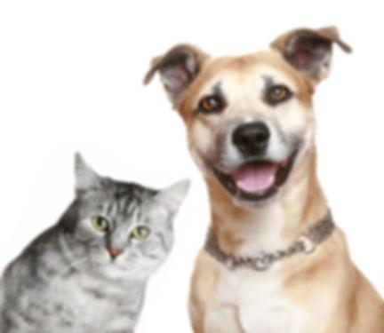 Google-cachorro-e-gato-foto-principal.jp