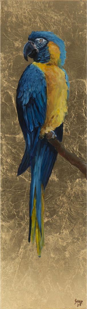 « Ara glaucogularis ? » Peinture à l'huile et encre sur bois doré à la feuille. 82.5x23.5cm