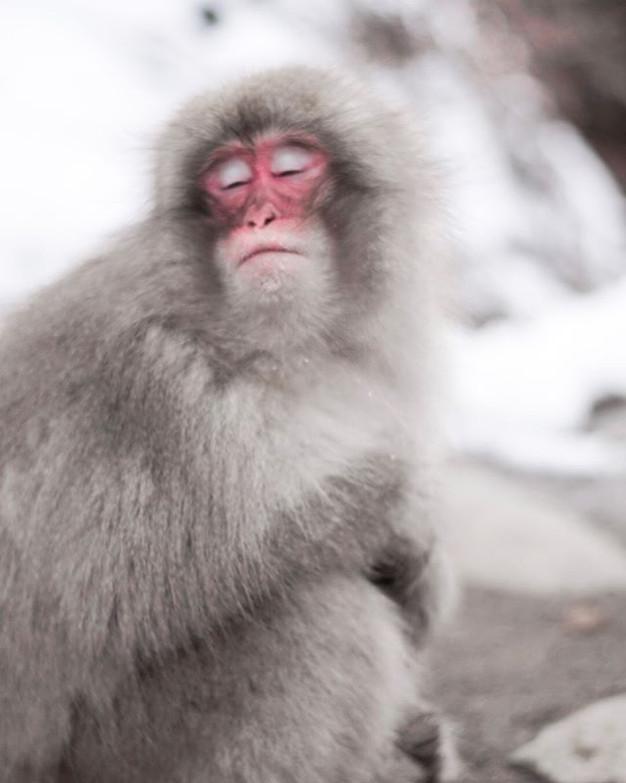 瞌眼猿.jpg