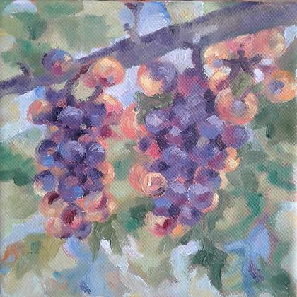 Vineyard Fruit 3