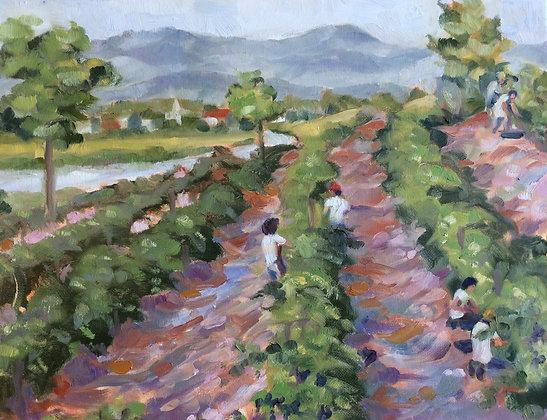 Vineyard Workers NFS