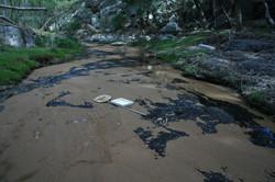 Freshwater macro-invertebrate collection