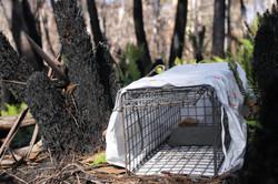 Ground cage