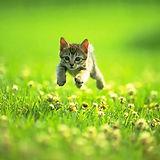 kitten_jumping.jpg