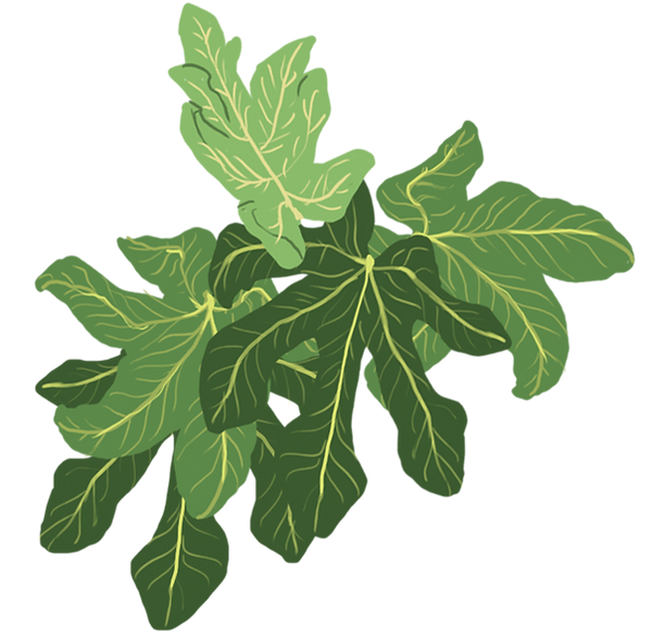 Fig-Leaves-2.png