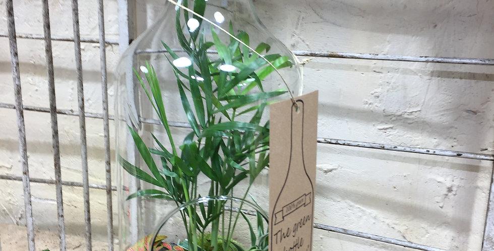 terrarium en plantes vertes