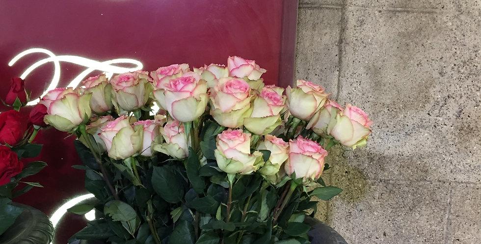 Rose  equateur rose Espérance 60cm